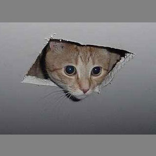 Ceiling Cat Treo 650 Wallpaper
